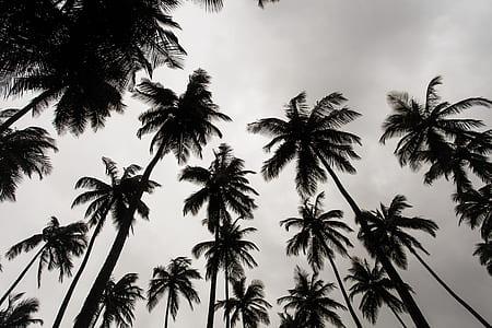 worm's eye vie of coconut trees under gray sky