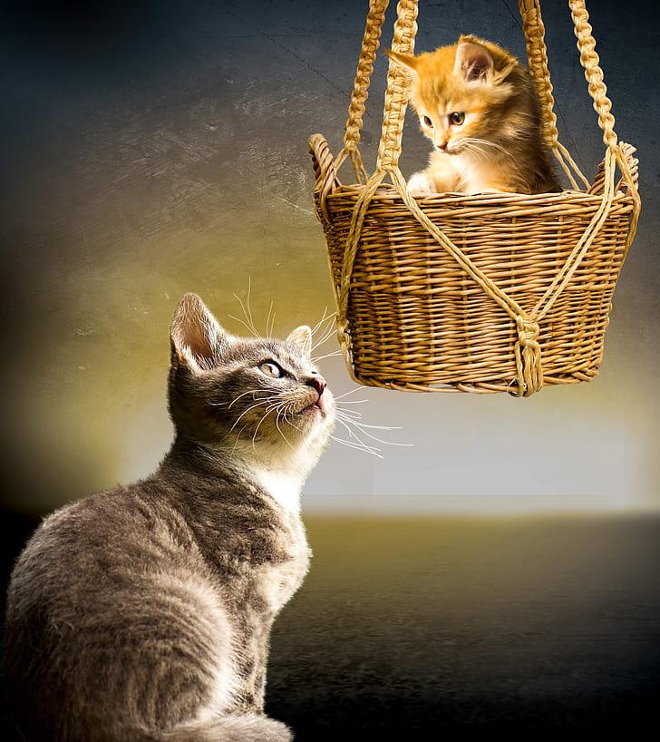 gray tabby cat and orange tabby kitten in brown wicker basket