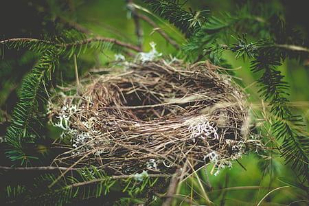 brown bird nest on tree
