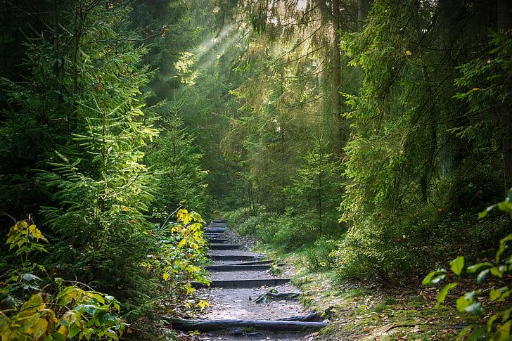 pathway around green trees