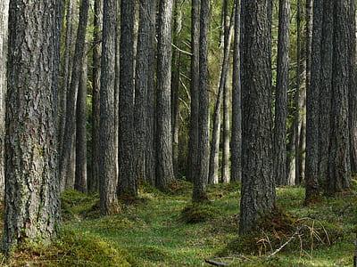 green tree log during daytime