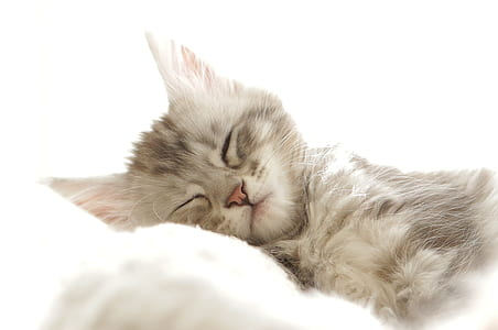 photo of gray and beige kitten sleeping