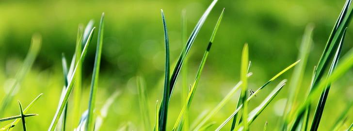 closeup photo of green grass