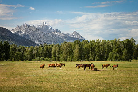 herd of horses surrounded by trees