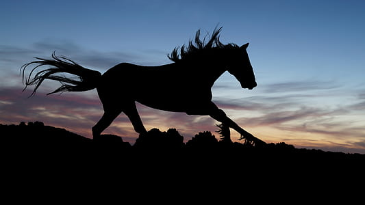 silhouette of horse during sunset