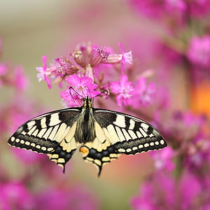 tiger swallowtail butterfly perched on purple petaled flower in closeup photography