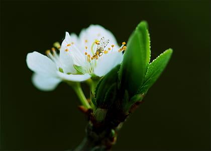 Close-up White Petaled Flower
