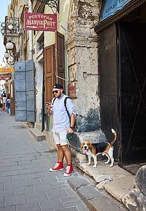 adult tri-color basset hound