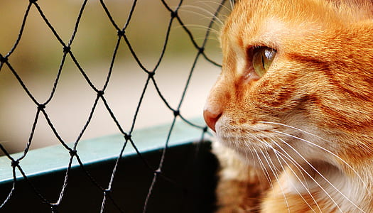 cat looking at cyclone wire