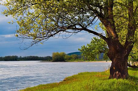 green tree near body of water
