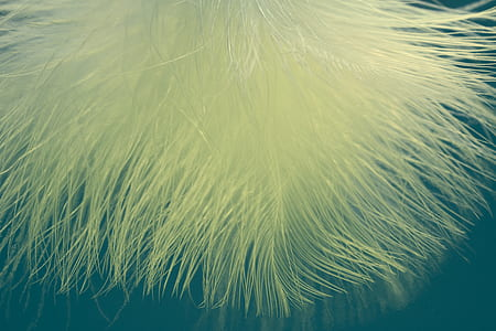 close-up photo of yellow fur