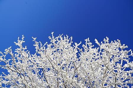 white-branch plants