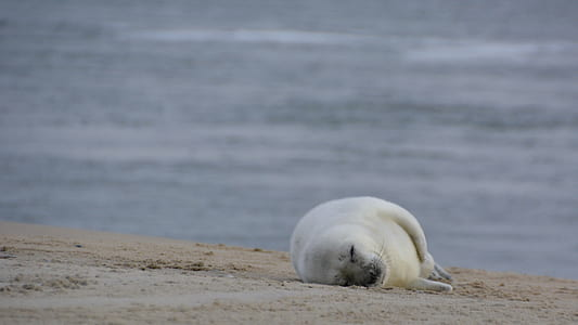 white seal lying on seashore at daytime