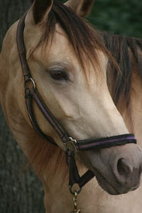 close view of brown horse