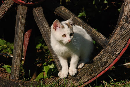 photo of cat on brown horse carriage wheel during daytime