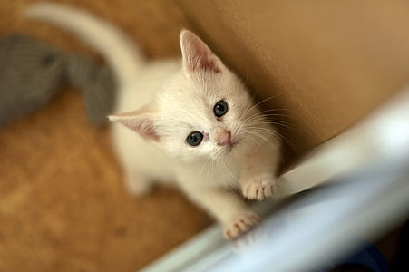 macro photography of white kitten
