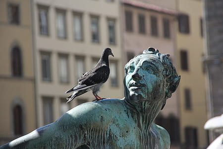 selective focus photo of black pigeon on person shoulder statue