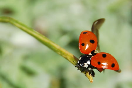 close up photography of ladybug perched on green stem