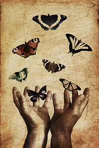 assorted butterflies and human hands painting