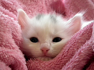 white short-fur kitten on pink bath towel