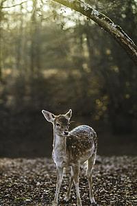 selective focus photography of deer kid