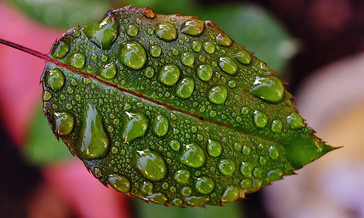 shallow focus photography of green wet leaf