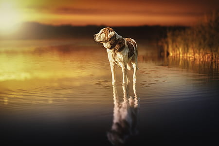 adult white and brown dog on body of water