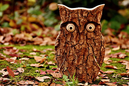 wooden owl standing on a green grass and dried leaves