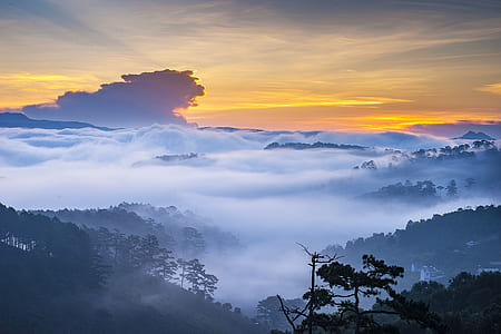 forest covered with fogs landscape photography