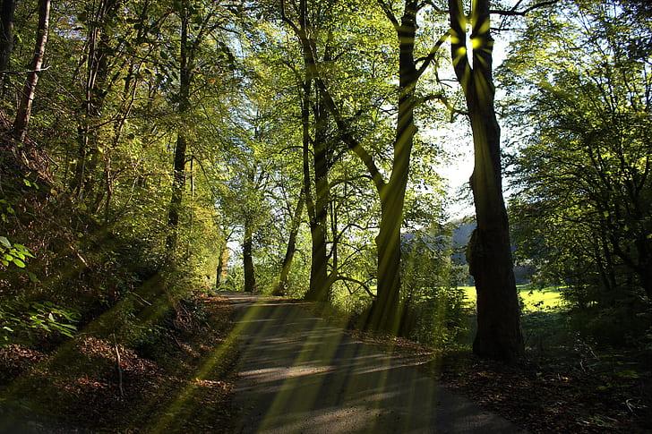 forest trees road