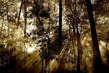 black trees against the light