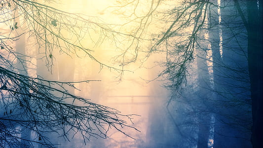 bare tree covered with fog