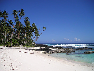 white sand seashore with palm trees during daytime