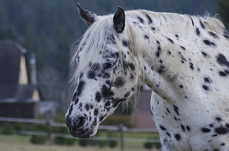 white and gray horse at daytime