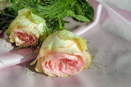 pink rose on white textile