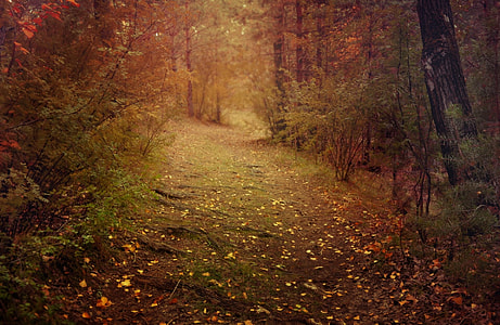 shallow focus photography of trail during daytime