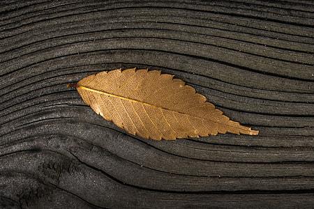 A fall leaf on a wood background