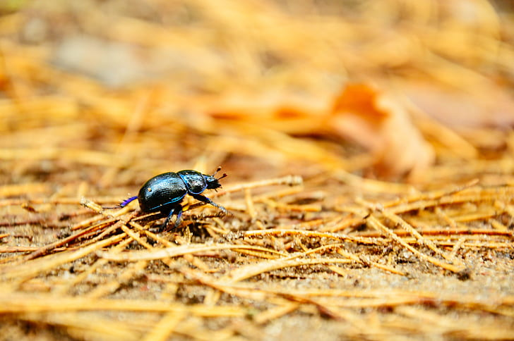 Black Bug Macro Photography