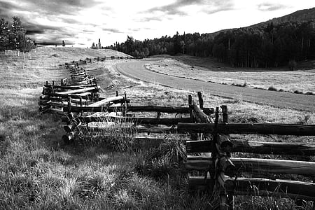 Greyscale Photo of Wooden Fence Near Road