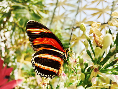 Selective Focus Photograph of Black and Yellow Butterfly