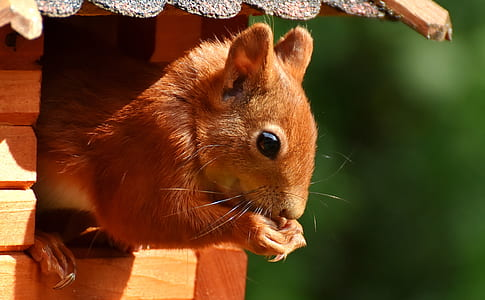 squirrel on brown wooden frame