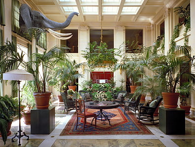 living room set surrounded by plant