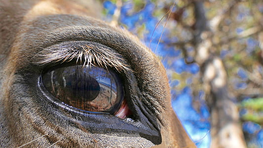 close-up photography of brown animal's eye during daytime