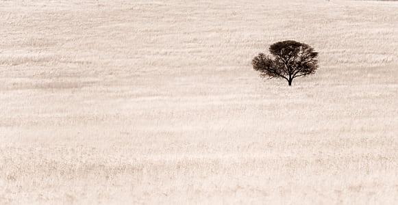 photo of black tree in the desert