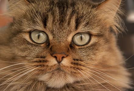 closeup photo of gray tabby kitten