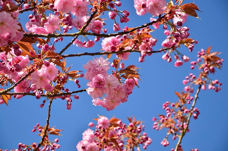 Royalty Free Photo Pink Flowers In Tree Pickpik