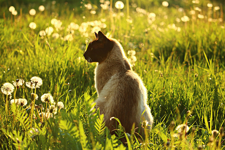 photo of medium-fur beige cat surrounded by green grass