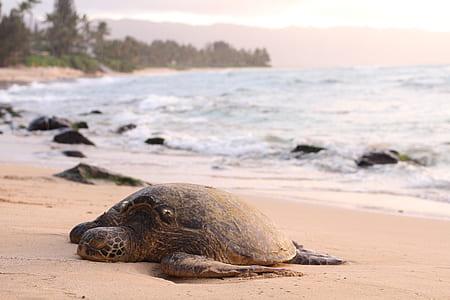 sea turtle nesting on brown sand