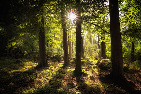 green leafed forest during daytime