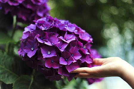 purple cluster-petaled flowers